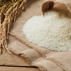 Raw rice grain and dry rice plant on wooden table