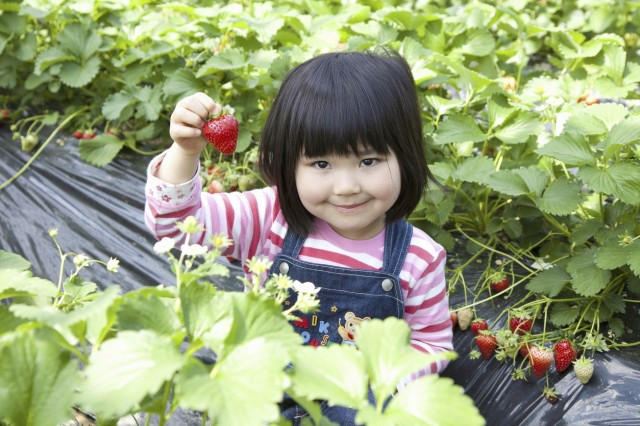 Strawberry picking kids snap