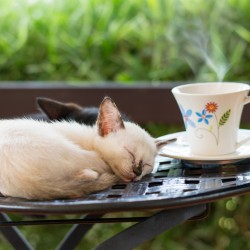 Cat cafe, cute kitten sleeping on a chair