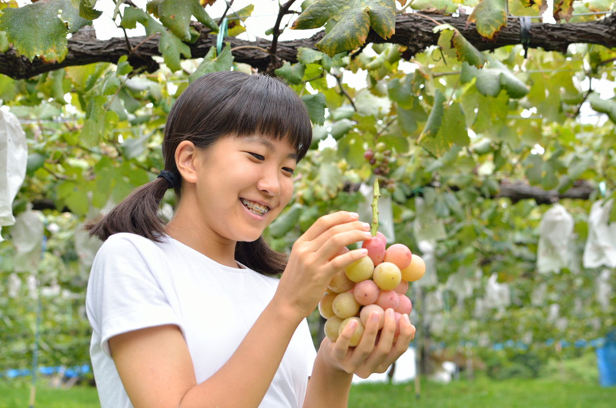 Girl enjoy grape picking