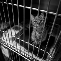 Sad Cat In A Cage