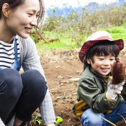 Children are digging vegetables with parents