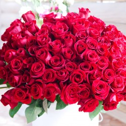 Bouquet of hundreds red roses